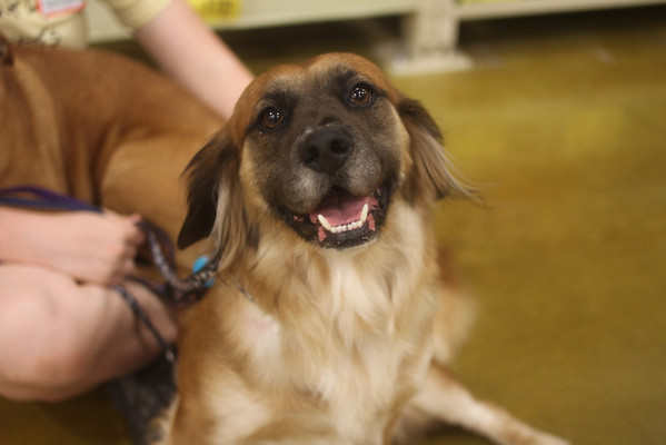 Mostly Mutts Adoption Photos
